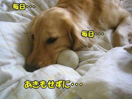 SANY0027_20090424183919.jpg
