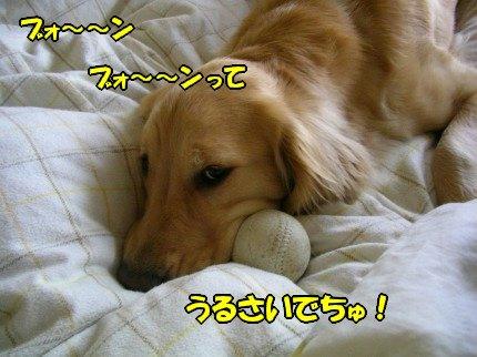 SANY0028_20090424183919.jpg