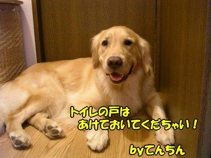 SANY0028_20090728155245.jpg