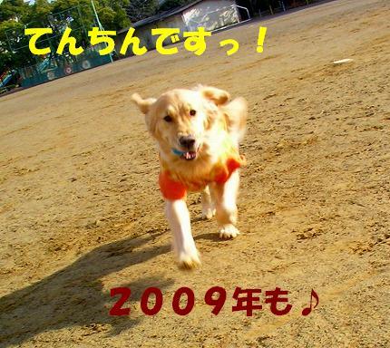 SANY0029_20090104174024.jpg