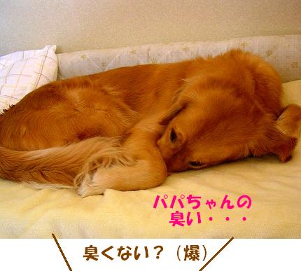 SANY0029_20090123172047.jpg