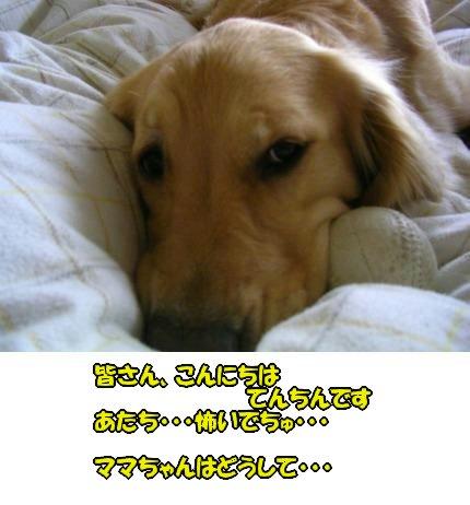 SANY0029_20090424183919.jpg