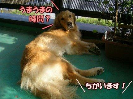 SANY0029_20090902102327.jpg