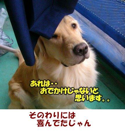 SANY0030_20090203002103.jpg
