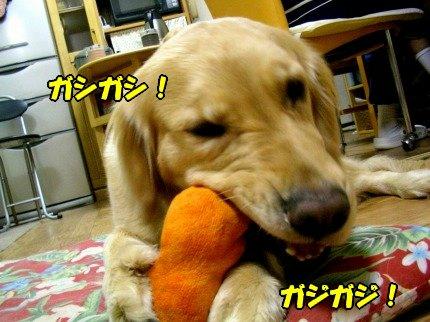 SANY0030_20090427103434.jpg