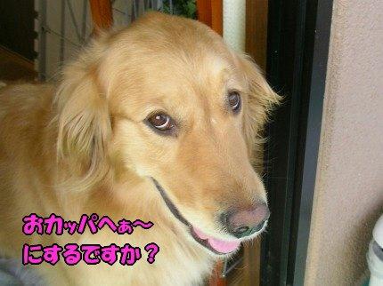 SANY0030_20090611191430.jpg