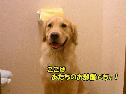 SANY0030_20090728155245.jpg