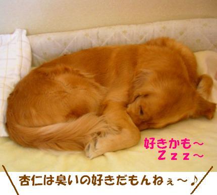 SANY0031_20090123172056.jpg