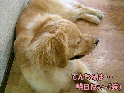 SANY0031_20090611191430.jpg