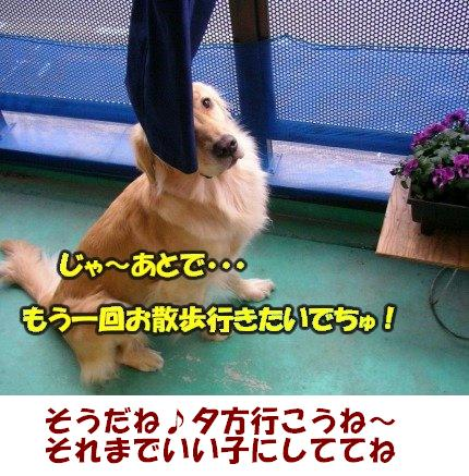 SANY0032_20090203002129.jpg