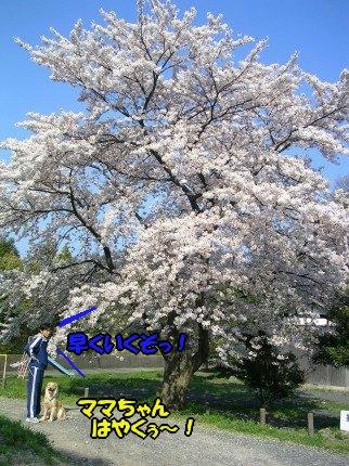 SANY0032_20090412232944.jpg