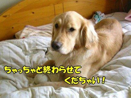 SANY0032_20090424183919.jpg