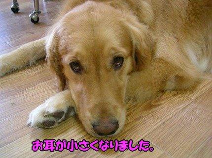 SANY0032_20090611191430.jpg