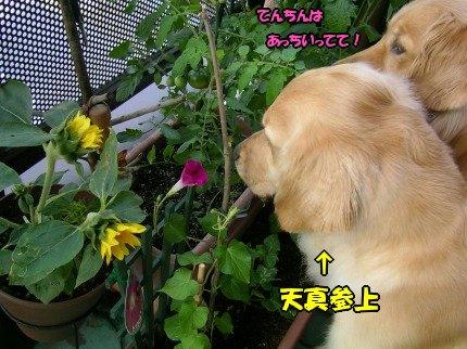 SANY0032_20090620075531.jpg