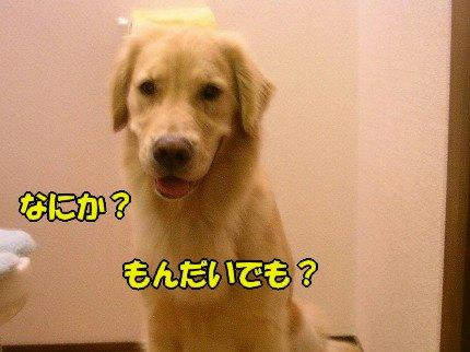 SANY0032_20090728155245.jpg