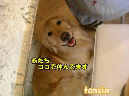 SANY0033_20090406073343.jpg