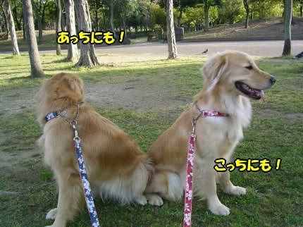 SANY0033_20090421110111.jpg
