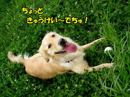 SANY0034_20090428050838.jpg
