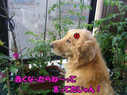 SANY0034_20090620075531.jpg