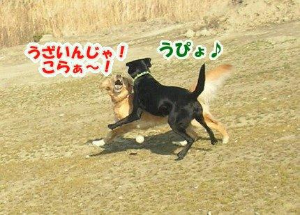 SANY0035_20090205002359.jpg