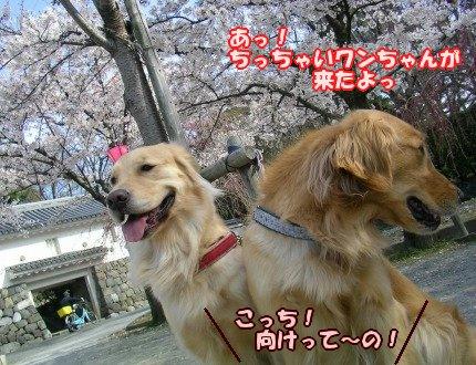 SANY0035_20090404105929.jpg