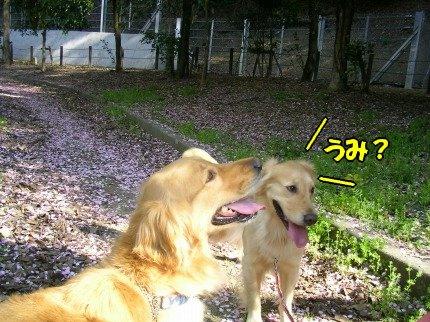 SANY0035_20090412232953.jpg