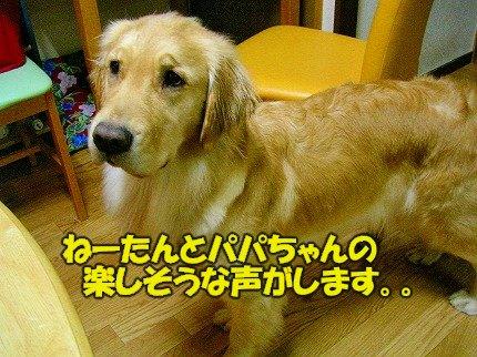SANY0036_20090215141805.jpg