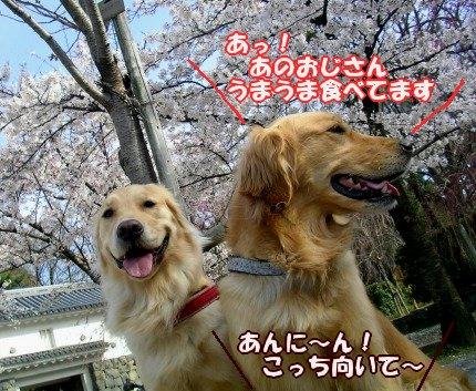 SANY0036_20090404105920.jpg