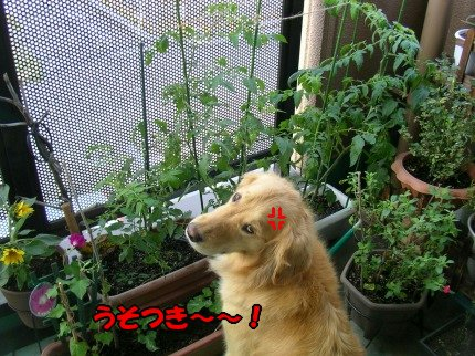 SANY0036_20090620075531.jpg