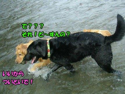 SANY0036_20090812212542.jpg
