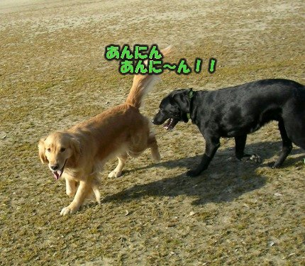 SANY0037_20090205002145.jpg