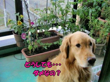 SANY0037_20090620075549.jpg