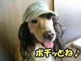 SANY0037_20090716184956.jpg