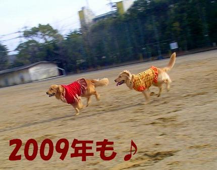 SANY0039_20090104174108.jpg