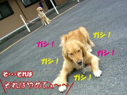 SANY0039_20090326161346.jpg