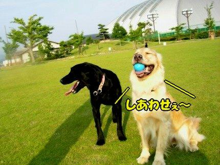 SANY0040_20090618213255.jpg