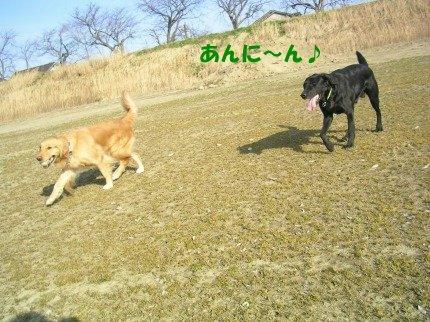 SANY0042_20090205002216.jpg