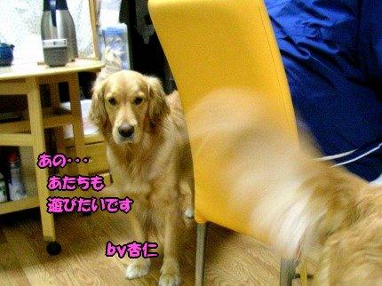 SANY0042_20090427103435.jpg