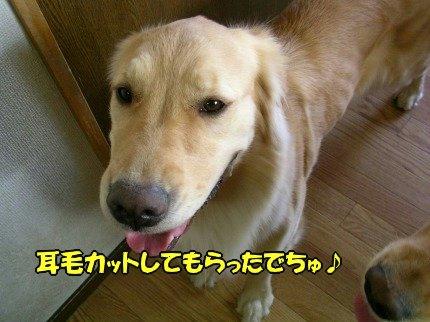 SANY0042_20090612173336.jpg