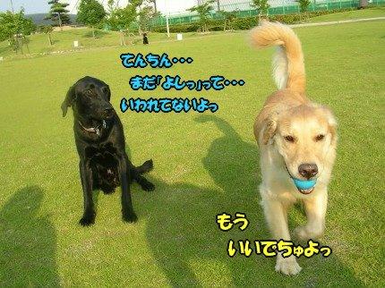 SANY0042_20090618213256.jpg