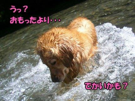 SANY0042_20090626085834.jpg