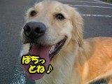 SANY0043_20090430005634.jpg