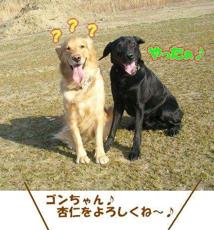 SANY0045_20090205005743.jpg
