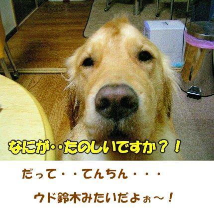 SANY0046_20090215141846.jpg