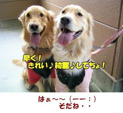 SANY0046_20090221225523.jpg