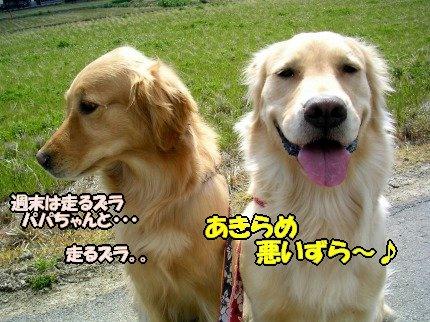 SANY0046_20090326161422.jpg
