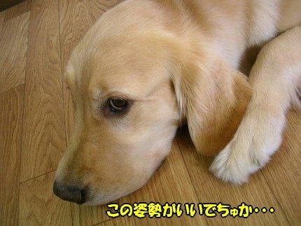 SANY0046_20090612173337.jpg