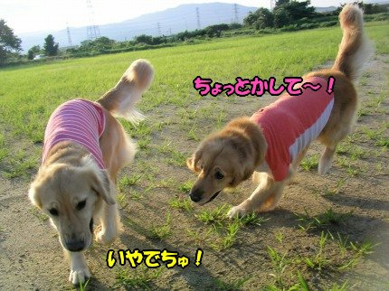 SANY0049_20090730200603.jpg