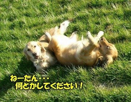 SANY0052_20090209002118.jpg