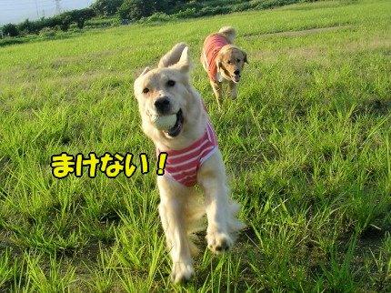 SANY0053_20090730200603.jpg